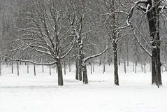 skogsnow Arkivfoto