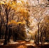 skogsnow Fotografering för Bildbyråer