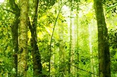 skogsolljus Arkivfoton