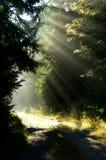 skogsolljus Royaltyfri Fotografi