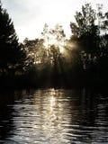 skogsolnedgång Arkivfoto