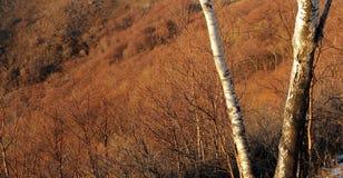 skogsolnedgång Royaltyfria Bilder