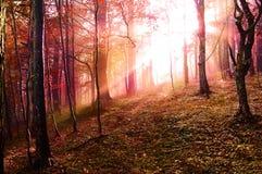 skogsolnedgång Arkivbilder