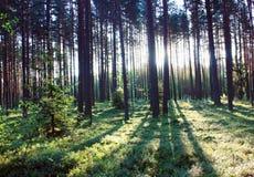 skogsoluppgång Royaltyfri Fotografi