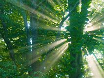 Skogsoluppgång Arkivfoto