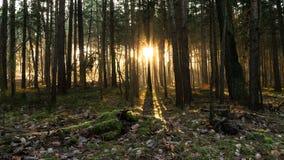Skogsoluppgång Arkivfoton