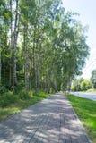 Skogstad Royaltyfria Bilder