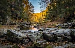 Skogström i nedgång Arkivbilder