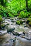 Skogström som kör över mossy rocks Arkivbild