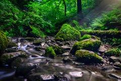 Skogström som kör över mossy rocks Royaltyfri Bild