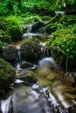 Skogström som kör över mossy rocks Arkivfoton