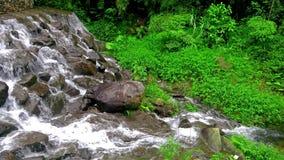 Skogström som kör över mossy rocks stock video