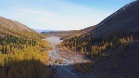 Skogström som kör över mossy rocks Bergturkosflod bland stenar och maxima Höstgulinglärken växer lager videofilmer