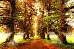 skogstrålar Arkivbilder