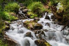 Skogströmmen som över kör, vaggar, en liten vattenfall Arkivbilder