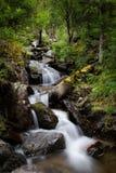 Skogströmmen som över kör, vaggar, en liten vattenfall Arkivbild