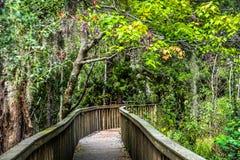 Skogsylt av Hilton Head Island Royaltyfri Fotografi