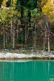 skogteak fotografering för bildbyråer