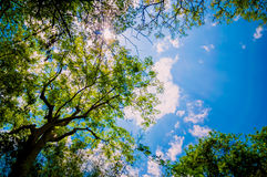 Skogträd. Arkivfoton