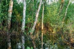 Skogträd i flodvatten och aftonsolnedgång Royaltyfri Fotografi