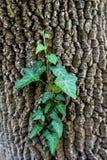 Skogträd med den gröna växten på kropp arkivfoto