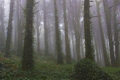 Skogträd med dimma Royaltyfri Fotografi
