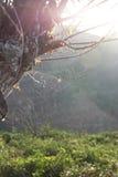 Skogträd och spindelnätet med solljus royaltyfri fotografi