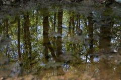 Skogträd reflekterade i vatten Royaltyfri Bild