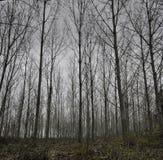 Skogträd under förkylninggrå färgerna november Arkivfoton