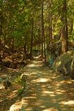 skogtrail Royaltyfria Foton