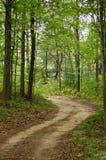 skogtrail Fotografering för Bildbyråer