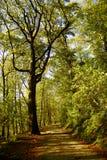 skogtrail Arkivfoto
