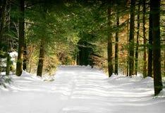 skogtrailvinter royaltyfri foto