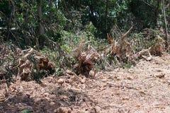 Skogtraktor som bygger en staketvägg royaltyfria bilder