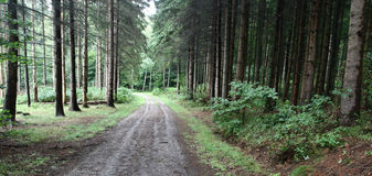skogtrees royaltyfria bilder