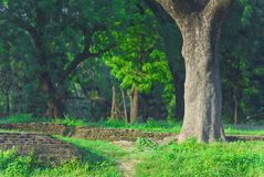 skogtrees Royaltyfri Foto