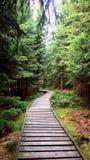 Skogtrottoar i träna arkivbild