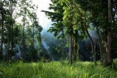 skogtyndoll Royaltyfri Fotografi