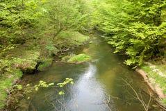 skogtyskflod Royaltyfri Foto