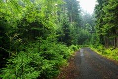 skogväg Royaltyfri Bild