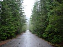 skogväg arkivbild