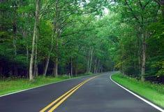 Skogväg Arkivfoto