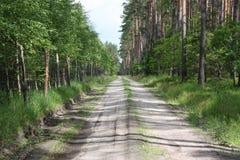 Skogväg Royaltyfria Foton