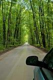 skogväg Royaltyfri Foto