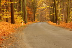 Skogväg. Arkivfoto