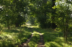 Skogväg. Royaltyfri Foto
