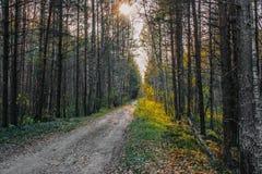 Skogväg i aftonsolen fotografering för bildbyråer