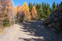 Skogväg i bergen Vägrengranträd Royaltyfri Fotografi
