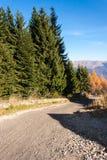 Skogväg i bergen Vägrengranträd Royaltyfri Bild