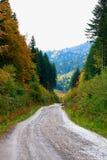 Skogväg i Carpathiansna Royaltyfri Bild